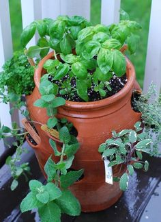 freezing fresh herbs ... and I usually just let them go to seed!  :-(