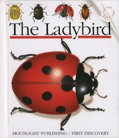 The Ladybird (First Discovery Series) - Find out where ladybirds live, what they eat, how they frighten their enemies, and where they lay their eggs.