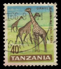 Giraffes, Mikumi National Park. Tanzania post stamp 40c , circa 1965
