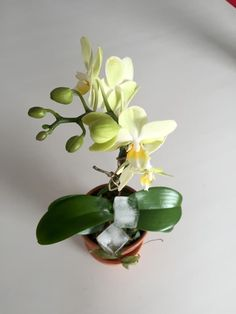 Anxious About Your Orchid? Try This Clever Watering Tip | Apartment Therapy