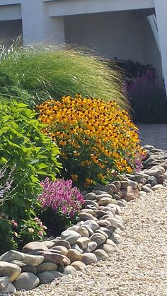 Beautiful late summer color with Black-Eyed Susan and Maiden Grass.