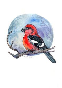 Crossbill watercolor by Anastasy Siilin