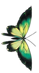 Бабочки клипарт - Животные клипарт - Кира-скрап - клипарт и рамки на прозрачном фоне