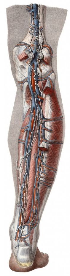 What Happens After ACL Surgery?   [Erson Religioso III, DPT, FAAOMPT] PHYISO ANSWERS. Pinned by SOS Inc. Resources http://pinterest.com/sostherapy.
