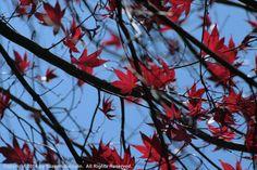 Look Up - Suzann Baldwin