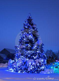 Christmas Tree | O Christmas Tree | Pinterest | Best Christmas Tree, Pine  And Pine Tree Ideas