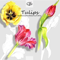 """These lively tulips were first sketched and then painted with watercolor on a cold press paper. Like all floral elements in this store they are all life-size. Perfect to use individually or together in endless combinations.    This DIGITAL CLIP ART PACK includes:    ★ Quantity: 9 watercolor and 9 pencil tulips clip arts with transparent background    ★ High quality 18 total 300 dpi PNG files.    ★ Life-Size: width 2.1"""" - 5.2"""" and height 4.9"""" to 10.9""""    ★ One large tulip wreath, size 17""""…"""