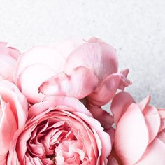 English Roses Pretty pink garden roses look so much like peonies. Pretty In Pink, Pink Flowers, Beautiful Flowers, Bouquet Flowers, Vintage Flowers, Pink Peonies, Exotic Flowers, Yellow Roses, Pink Roses
