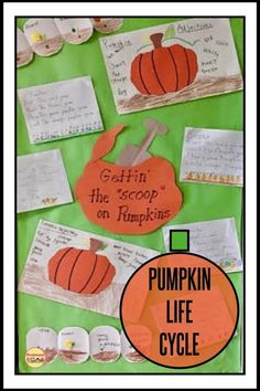 Pumpkin Life Cycle A