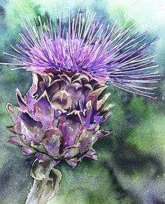 Cardoon. Amazing things, related to artichokes, very insect friendly! This is an original watercolour, cards and prints will be available soon.