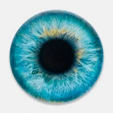 Image result for marc quinn eye