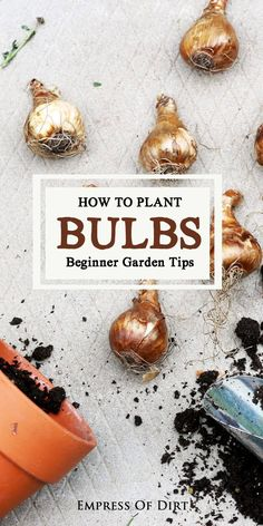Spring will be a little more beautiful with some colorful flowering bulbs. Before the ground freezes in the fall, it's time to order bulbs and get them planted. This beginner guide will get you started. And, you don't need a garden Gardening For Beginners, Gardening Tips, Diy Jardim, Garden Bulbs, Spring Bulbs, Planting Bulbs In Spring, Fall Plants, Bulb Flowers, Rare Flowers