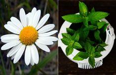Plants, Cover, Plant, Planets