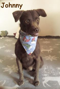 01/07/15-Johnny Terrier & Chihuahua Mix • Young • Male • Small Baja Animal Sanctuary San Diego, CA