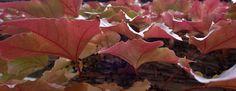 Petit sondage d'automne   Proposez vos idées sur le sujet en laissant un commentaire http://www.mybnb.fr/?p=1731  admin