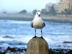 Sea Point Sony, My Photos, Animals, Animales, Animaux, Animal, Animais