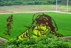 japanese rice field art | samurai keiji maeda in yonezawa (yamagata prefecture)