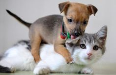 Cats and Dogs time: Cats time (hora de gatos)