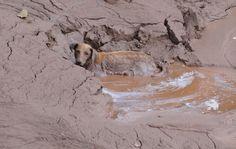 7/11 - Cadela é achada no meio da lama no distrito de Paracatu