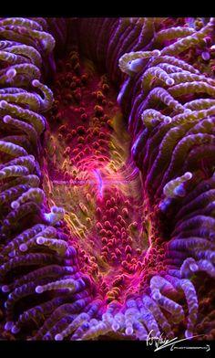 Coral by Virginia Wilhelmer, via 500px