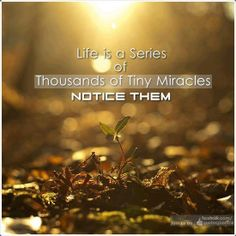 Life is a series of thousands of tiny miracles. Notice them! it's taken me a number of years to realize this, but it really is true. lots and lots of tiny miracles! Tiny Miracles, A Course In Miracles, Miracles Happen, Positive Thoughts, Positive Quotes, Happy Thoughts, Positive Messages, Random Thoughts, Positive Affirmations