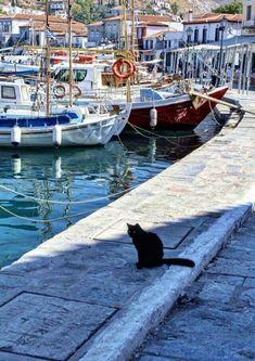 Poros island, Saronicos bay, Greece #cruceroislasgriegas Poros Greece, Places To Travel, Places To Go, Greece Islands, Turkey Travel, Animals Of The World, Greece Travel, Crete, Places Around The World