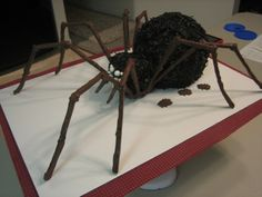 Hairy Spider Hairy Spider Spider is German Chocolate and made from the sports ball pan and an oversized cupcake for the head. Legs are chocolate covered... #spider #spider-web #halloween #halloweencake #cakecentral