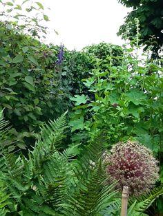 Oerwoud, eigen tuin.
