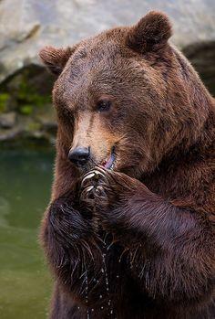 Teddy beim Apfel essen.