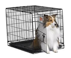 14 Best Dog Crates Amp Kennels Images Dog Crate Crates