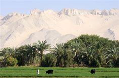 #Egypt #Farmers in #Oasis of #Dakhla
