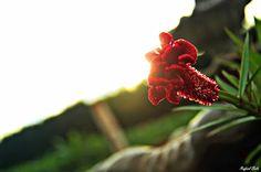 Olhares do avesso: Ideologia dos lugares para sentar descobrindo dedicadamente dedos de ritmos arrítmicos arrebatando ameaçadoramente acrílicos corações Discovering dedicated fingers of rhythms Arrhythmic menacingly snatching acrylics hearts #poesia #poetry #poeta #poet #discovering #descobrindo #hearts #corações #direções #directions #hell #inferno #sentada #sitting #olharesdoavesso Curta a fanpage like the fanpage https://www.facebook.com/OlharesDoAvesso/