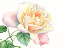 Rose print of watercolour painting A3 size largest by LouiseDeMasi