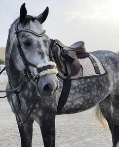 Who loves Dapple Grey horses? Cute Horses, Pretty Horses, Horse Love, Horse Girl, Thouroughbred Horse, Horse Barns, Horse Photos, Horse Pictures, Most Beautiful Horses