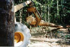 Reduced Impact Logging from the International Tropical Timber Organization