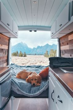 At home Van life at Grand Teton NP! At home Van life at Grand Teton NP! Cute Baby Animals, Animals And Pets, Funny Animals, Cute Puppies, Cute Dogs, Dogs And Puppies, Doggies, School Bus Camper, Camper Life