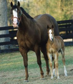 When Horse Breeding Evolves Into Horse Training – America's Horse Daily  Part 2