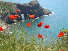 Beautiful Photos Of Nature, Beautiful Flowers Wallpapers, Nature Photos, Beautiful Landscapes, Beautiful Places, Water Flowers, Love Flowers, Wild Flowers, Beginner Painting