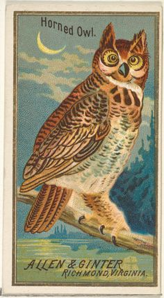 Horned Owl, from the Birds of America series (N4) for Allen & Ginter Cigarettes Brands : Free Download & Streaming : Internet Archive