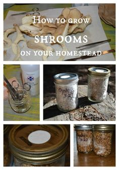 Hydroponic Gardening Ideas How to grow shrooms -- Joybilee Farm Garden Mushrooms, Edible Mushrooms, Growing Mushrooms, Stuffed Mushrooms, Wild Mushrooms, Mushroom Spores, Mushroom Tea, Mushroom Cultivation, Hydroponic Farming