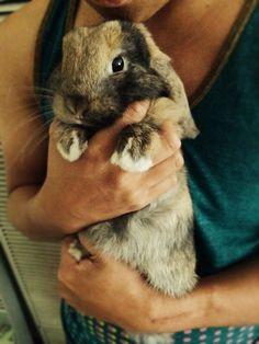 hug a bunny