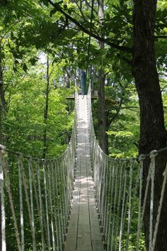 This Canopy Walk In Boyne City Michigan Will Make Your Stomach Drop Michigan Vacations, Michigan Travel, Camping Michigan, Michigan Day Trips, Lake Michigan Vacation, Michigan Facts, Places To Travel, Places To See, Travel Destinations