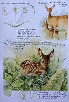 Beautiful artwork by Marjolein Bastin. She also does the Vera the Mouse books. Her website is: http://www.marjoleinbastin.com/en