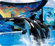 I love going to Sea World! Seeing beautiful animals is amazing.