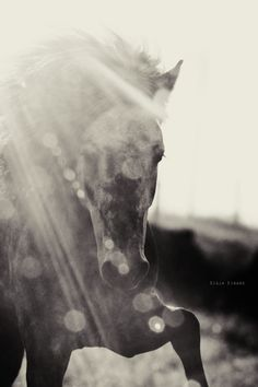 "stunning picture of a horse  ""Just as the great oceans have but one taste, the taste of salt, so too there is but one taste fundamental to all true teachings of the way, and this is the taste of freedom."" — Buddha"