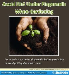 Put a little soap under fingernails before gardening to avoid getting dirt under them.