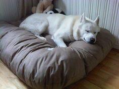 Los perros deben tener camas secas por su salud. La mayoría de las camas para nuestras mascotas están hechas con un cobertor externo y un relleno al interior de la cama. El cobertor externo debe ser removible y lavable. Para ayudar a que el relleno interior esté seco, puedes añadir un aislador de prueba de agua entre el relleno y el cobertor.