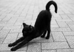 Downward Cat?