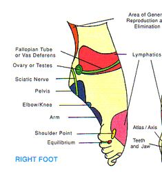 Acupressure - Pressure Points - Ken To Fude No Ryu Kenshu Kai Karate - Soke Solly Said