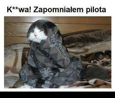 #kot #cat #catsofinstagram #cats #catstagram #instacat #kitty #kotek #koty #poland #love #catlover #kitten #polska #pet #koteł #cute #animals #polishcat #meow #polishgirl #animal #photooftheday #catoftheday #miał #photography #mem #memy #cats_of_instagram #pilot Cats Of Instagram, Instagram Images, Instagram Posts, Cat Day, Poland, Cat Lovers, Pilot, Kitten, Pets